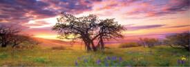 HEYE Panoramapuzzle - Alexander von Humboldt - Oak Tree - 2000 Teile