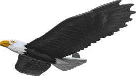 Wurfgleiter Real Flyer Adler